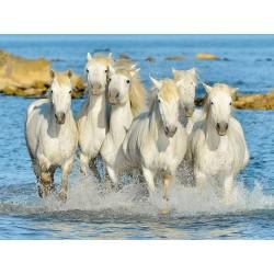 Caballos en el Agua