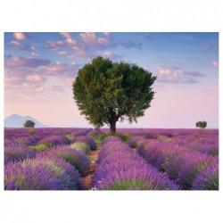 Campos de Lavanda, Francia