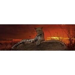 Atardecer del Leopardo