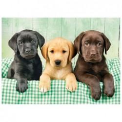 Tres Labradores