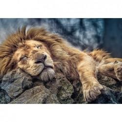 1000pz. - León Durmiendo