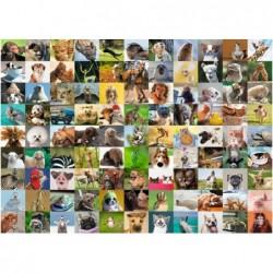 99 Animales
