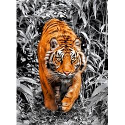 Tigre (Metalizado)