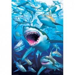 El Club de los Tiburones