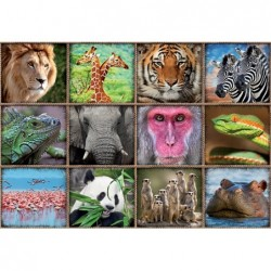 Collage de Animales Salvajes