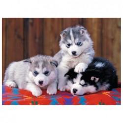 Cachorros de Huskie