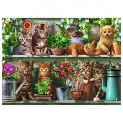 Gatitos en la Estantería