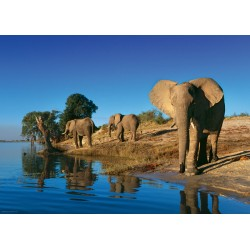 Elefantes Sedientos