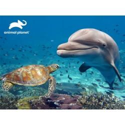 500pz. - 3D Puzzle: Delfín
